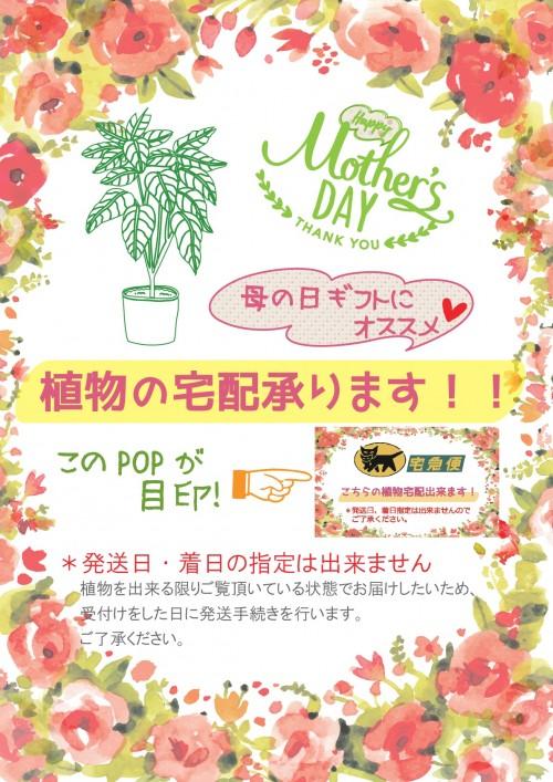 A4_母の日植物発送-001